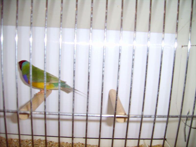 lpic0616 2008 dans Zoom sur