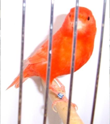 Salon des oiseaux ce week-end à Beuvry dans Photos de Beuvry oiseauxexotiques2