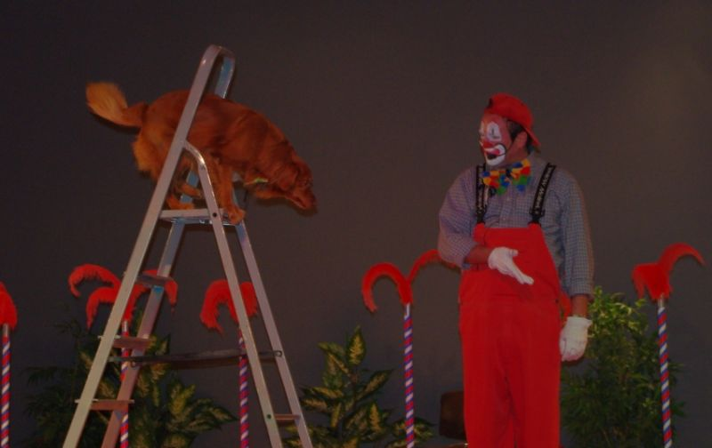 spectacle chien et clown