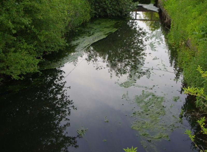 eutrophisation beuvry petite jonction au canal d'aire