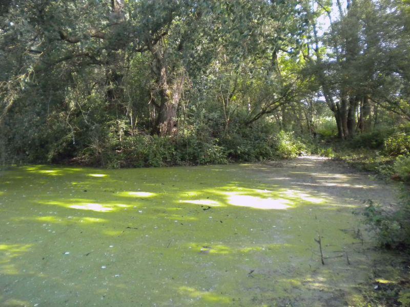 eutrophisation marais de cambrin62