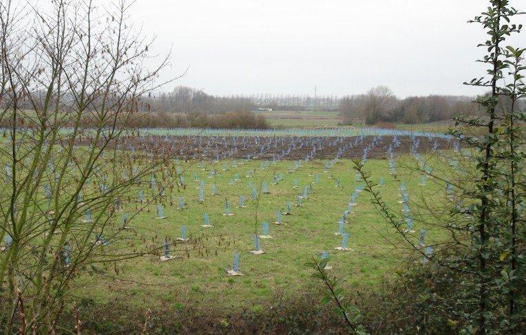 plantations arbres moncher beuvry 26 décembre 2011